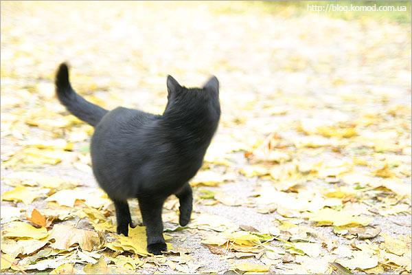 Там живет эта совершенно черная и общительная кошка